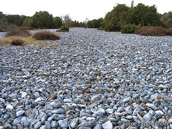 Die Feuersteinfelder auf der Insel Rügen bei  Mukran (Quelle: Wikipedia, Foto: Lapplaender)