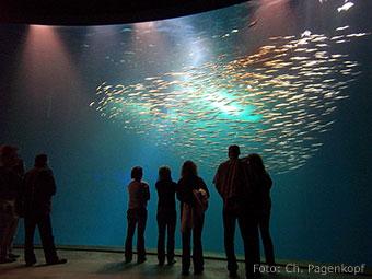 """Aquarium mit Fischschwarm im """"Ozeaneum"""" in Stralsund (Quelle: Wikipedia, Foto: Ch. Pagenkopf)"""