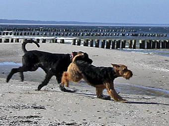 Auch Hunde auf der Insel Rügen voll auf ihre Kosten...